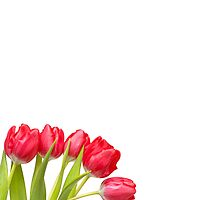 Humble Tulips.... by Bob Daalder