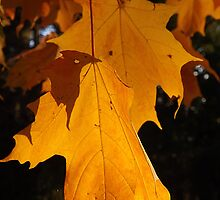 Bright Leaves by Timothy  Ruf