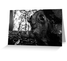 Head In the Trees Greeting Card