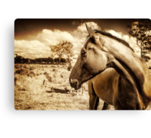 Looking Back... Canvas Print