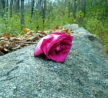 A Lovers Rose by Timothy  Ruf