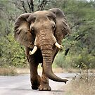 MAJESTIC BEAUTY - THE AFRICAN ELEPHANT – Loxodonta africana - AFRIKA OLIFANT by Magaret Meintjes