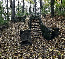 Forest Steps by Timothy  Ruf
