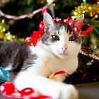 Christmas is for everyone! by RomainChalaye
