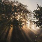 Sun Shafts by Tobias King