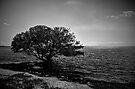 Mangrove Silhouette by njordphoto
