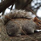 Squirrel Close-Up, Central Park, New York City by lenspiro