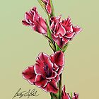 Pink Gladiolus by Brittany LeBold