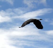 Great Blue Heron Flying Past the Clouds Above Trojan Pond 2 by Dawna Morton
