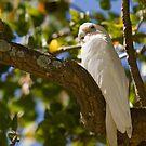A Regal Bird by reflector