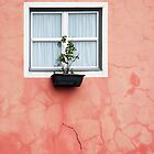 Window Box by stuartmac