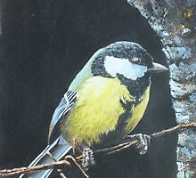 Great Tit by peteceiliog
