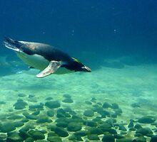 Deep Diver by missmoneypenny