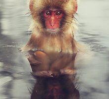 Reflecting Snow Monkey by cjrush