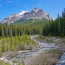 Alberta Wilderness by Harry Oldmeadow