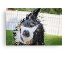 Dog bath! Canvas Print