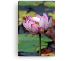 Lotus Ready To open Canvas Print