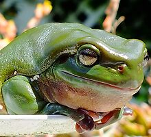 Fatty and Looking Fabulous Froggy by Gabrielle  Lees