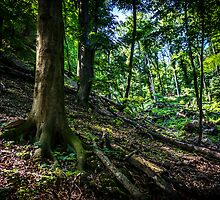 Untouched forest by TOM KLAUSZ