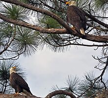 Mr & Mrs Eagle  by John  Kapusta