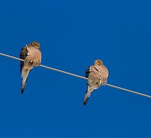 Winter Doves by Thomas Young