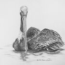 Brown Pelican on Water by Deb Fedeler