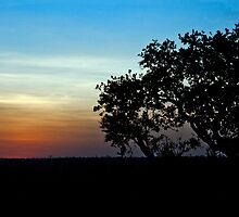 Sunrise Masai Mara by phil decocco