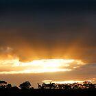Tree Line Silhouette by jwwallace
