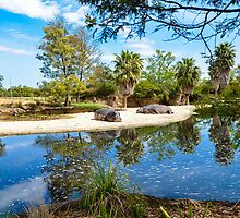 Werribee Zoo - Hippos by Jo-Anne Clifford