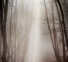 Misty forest by Dobromir Dobrinov