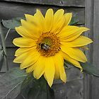 A Sunflower and the Bumblebee by Art Hut