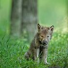 Timber Wolf Pup by WolvesOnly