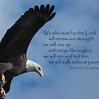 Rise up with Wings Like Eagle's by Deb Fedeler