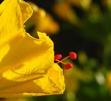 Abuelita's Garden Flower Yellow by Michelle McCullough
