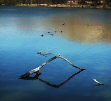 Calm Water at the Lake by Lucinda Walter