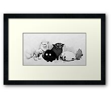 Persian cats Framed Print