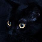 Black cat by wendywoo1972
