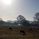 Where sheep may safely graze by John Dalkin