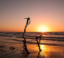 Beach Tree by Motti Golan