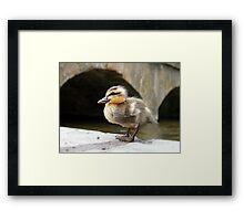 Little Quack ! Framed Print