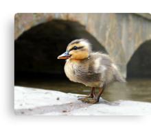 Little Quack ! Metal Print
