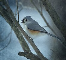 Titmouse by Sandy Keeton