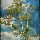 White Birch In May by Lois  Bryan