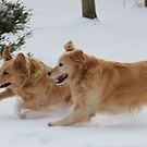 Yahoo! Snow IS FUN! Ozzy & Lotus by goldnzrule