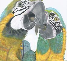 Kissing Macaws by Lesley Clarke
