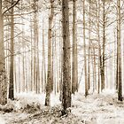 Sunlit Hazy Trees in Neutral Colors by Natalie Kinnear