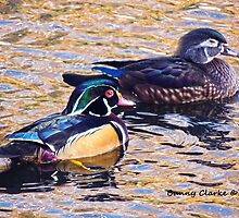 Dreaming of Wood Ducks by Bunny Clarke