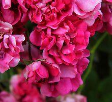 My Wild Prairie Roses by WildestArt