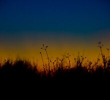 Whispering Weeds at Sunset by AnkhaDesh