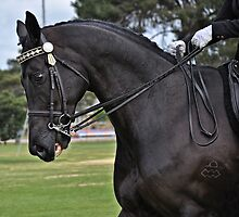 Black Beauty by JaninesWorld